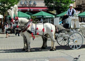 Photo of a horse-drawn taxi in Poland