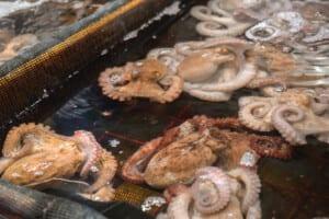 photo of Sannakji, live octopus
