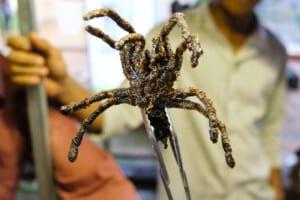 photo of a tarantula on a stick
